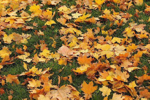 Leaves, Autumn, In The Fall Of, Colorful, Nature, Tree