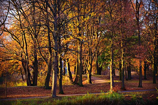 Forest, Tree, Park, Path, Autumn Colors, Fall, Foliage