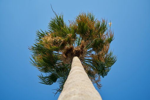 Palm, Tree, High, Blue, Green, Tropical, Nature, Leaves