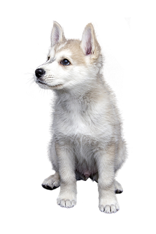 Dog, Pet, Isolated, Animal, Friendship, Trust, Puppies