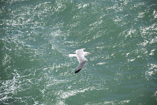 Seagull, Bird, Sea, Egg, White, Gray, Green, Wing