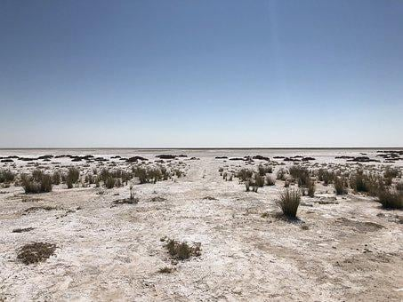 Etosha, Africa, Safari, Lion, Nature, Wild, Trip