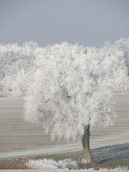 Winter, Snow, Regensburg, Tree