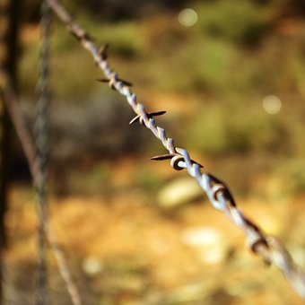 Escalante Barbed Wire, Barbed, Wire, Fence, Grand