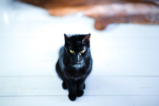 Black, Cat, Sitting, Pet, Animal, Feline, Kitten