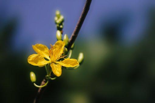 Apricot Blossom, Blossom, Flowers, Spring, Tree, Nature