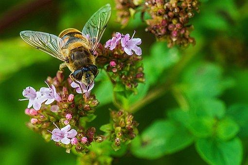 Flower Garden, Bee, Blossom, Bloom, Plant, Garden