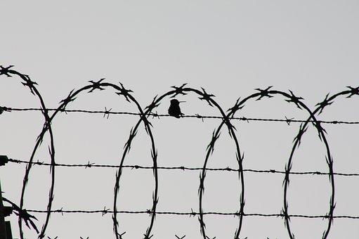 Bird, Cage, Birds, Creature, Wild, Jail, Waters