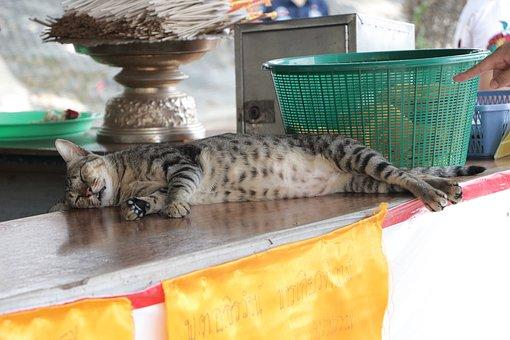 Cat, Watkhunin, Angthong, Thailand, Ang Thong, Temple