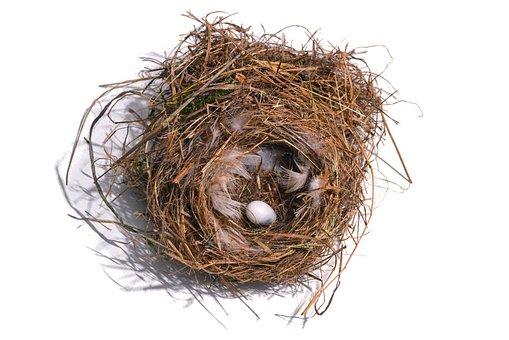 Nest, Bird's Nest, Bird, Egg, Yolk, Stolen, Feather