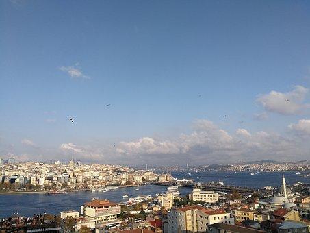 Freedom, Gulls, City, Estuary, Bosphorus