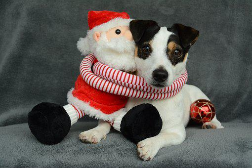 Jack Russel, Christmas, Father Christmas, Ball, Dog