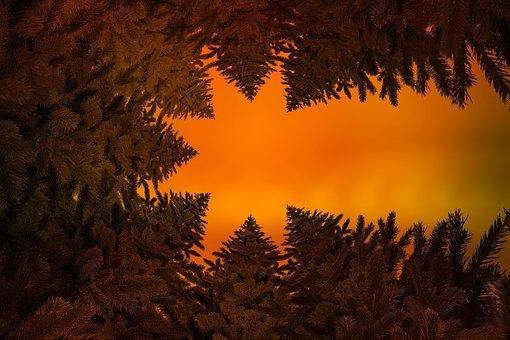 Christmas, Comet, Poinsettia, Holly, Fir Tree, Star