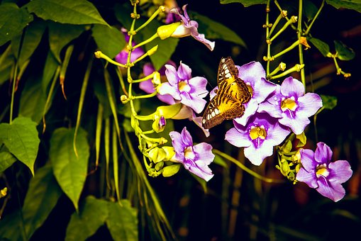 Butterfly, Flower, Purple, Garden, Yellow, Indoor