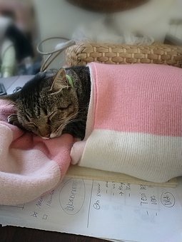 Cat, Sleep, Sleeping, Scarf, Peaceful, Animal, Fluffy