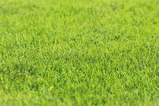 Grass, Lawn, Green Grass, Green, Background, Field