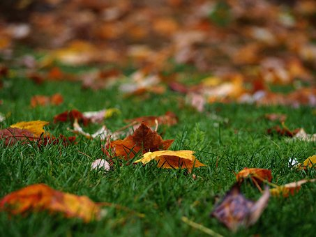 Autumn, Leaf, Color, Warm, Green, Nature, Earth, Grass