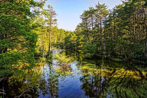 Water, Stream, Landscape, Green, Outdoor, Flow