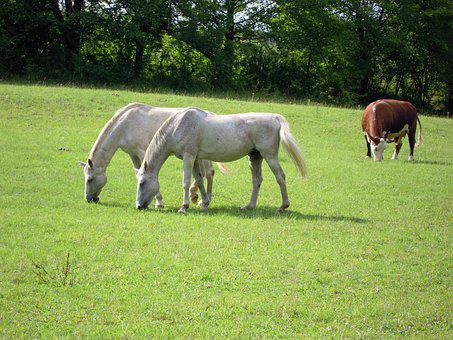Animal, Mold, Pasture, Green, Graze, Meadow, Horse