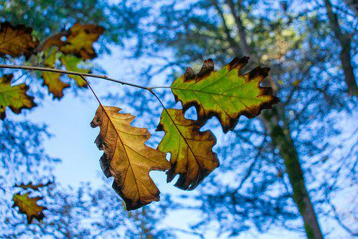 Leaves, Leaf, Autumn, Plant, Forest, Nature, Green