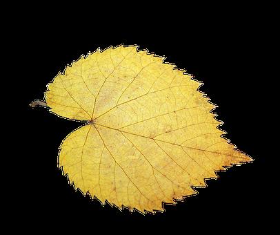 Foliage Leaf, Fall Foliage, Isolated, Yellow