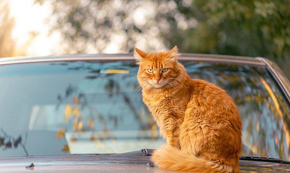 Lovely, Sun, Cat, Car, Reflection, Glass, Trees, Sky