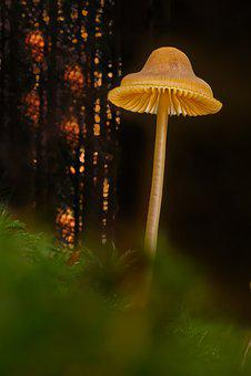 Mushroom, Small Mushroom, Sponge, Mini Mushroom, Moss