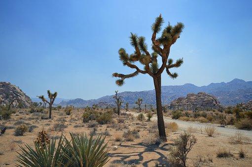 National Park, Landscape, Desert, California, Cactus