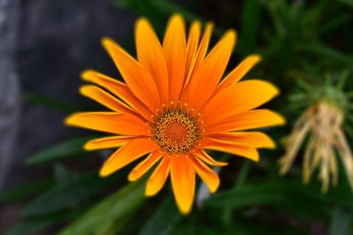 Flower, Nature, Plant, Beauty, Romantic