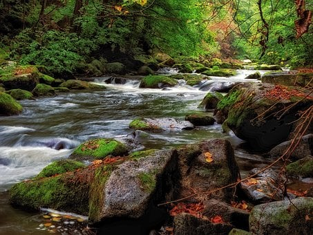 Rapids, River, Water, Nature, Landscape, Forest