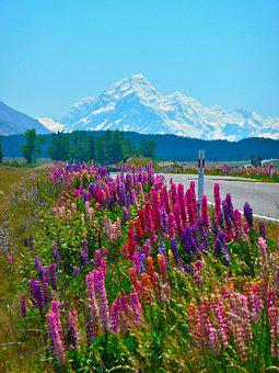 Flowers, Alpine, Mountains, Nature, Roadside, Scenic