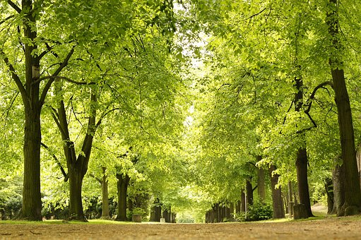 Park, Green, Tree, Nature, Summer, The Path