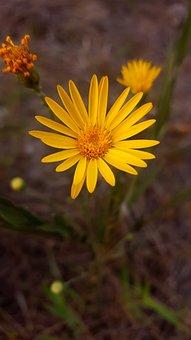 Flower, Yellow Flower, Nature, Wild Flower