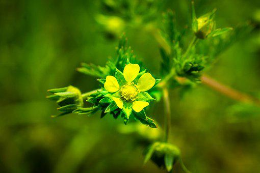 Yellow Flowers, Light, Spring, Nature, Flowers, Plants