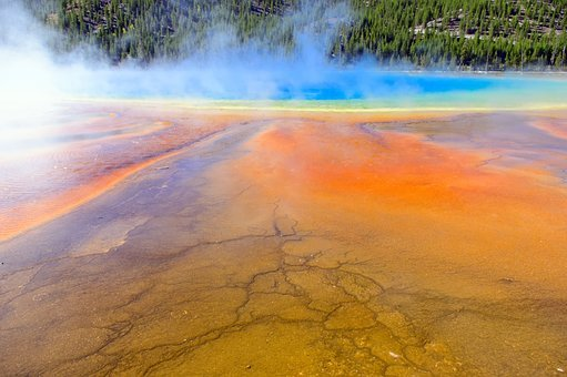 Orange Mats At Grand Prismatic, Spring, Hot