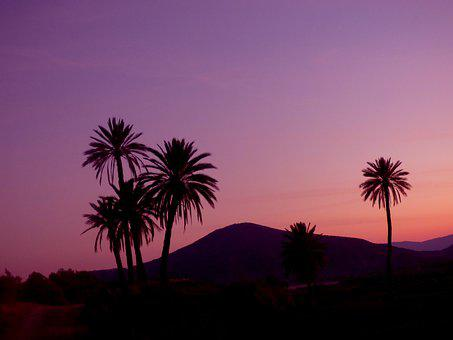 Sunset, Palm, Nature, Landscape, Palms