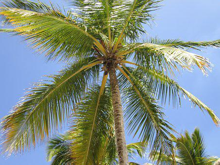 Palm Tree, Blue, Beach, Sky, Tropical, Paradise, Ocean