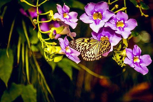 Butterfly, Flower, Purple, Garden, Yellow, Indoor