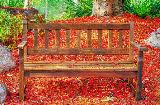 Seat, Tree, Red, Petals, Colorful, Nature, Quiet