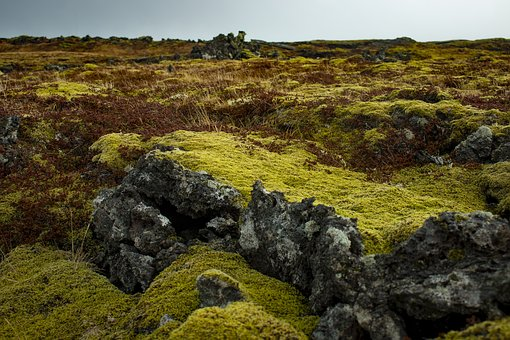 Iceland, Moss, Green, Nature, Landscape, Stones, Rock