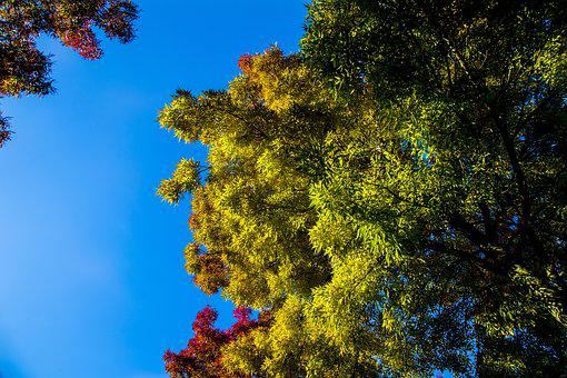 Autumn, Color, Tree, Leaves, Colorful, Bright, Sheet