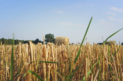 Field, Straw, The Ecclesia, Harvest, Agriculture