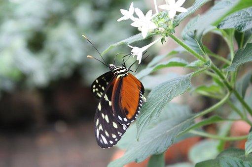 Butterfly, Summer, Spring, Plant, Close Up, Butterflies