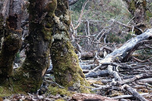 Tasmania, Cradle Mountain, Australia, National Park