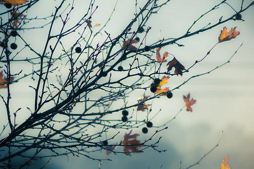 Winter, Leaves, Background, Blur, Yellow Leaves, Tree