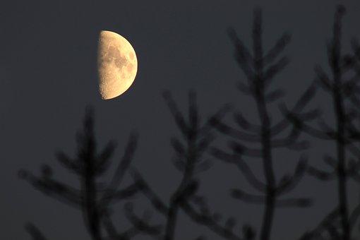 Half, Moon, Night, Tree, Aesthetic, Moonlight