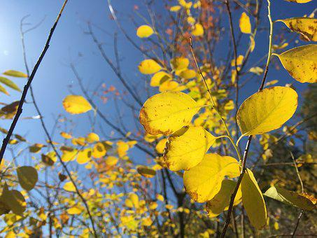 Golden, Autumn, Leaves, Colorful, Blue Sky, Trees