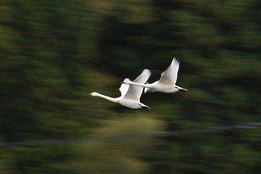 Animal, Forest, Bird, Wild Birds, Waterfowl, Fields