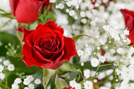 Red, Rose, Bouquet, Bloom, Blossom, Love, Wedding