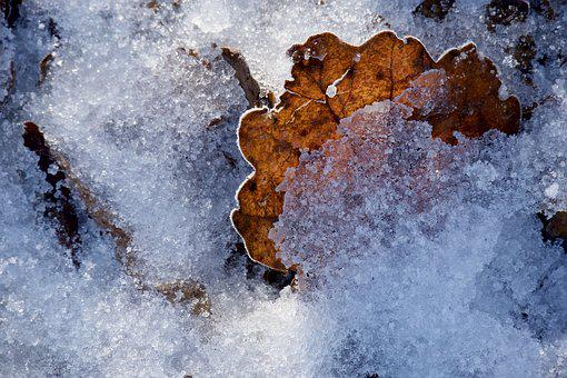 Ice, Winter, Leaf, Leaves, Cold, Frozen, Nature